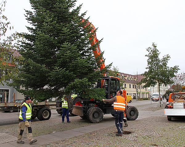 Weihnachtsbaum Barleben aufstellen